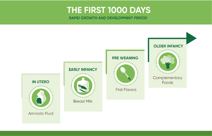 The first 1000 days: Rapid growth and development period